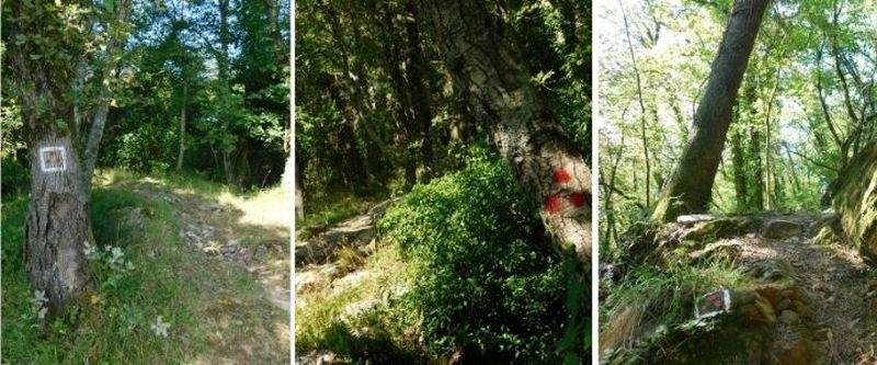 I magnifici sentieri del parco del Monte di Portofino